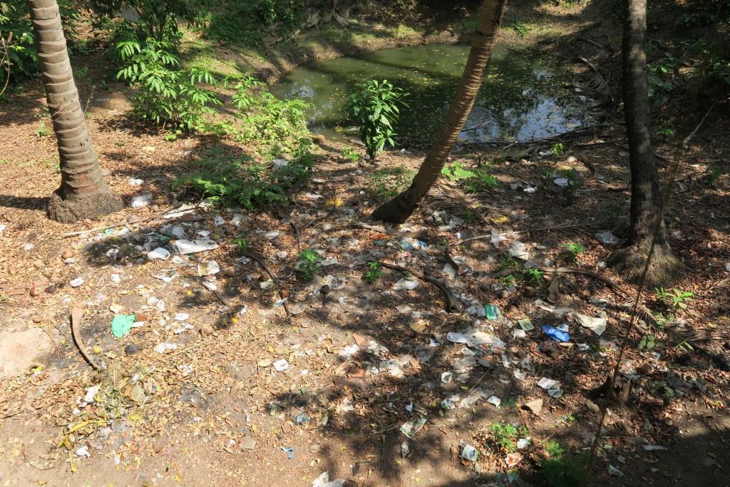 Un petit étang en Inde ? non une poubelle